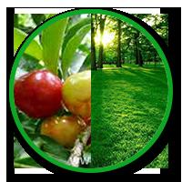cây ăn quả, cây lâm nghiệp, cây trồng rừng, cây cảnh