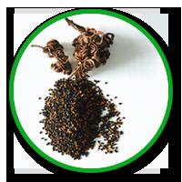 hạt giống cây trồng, hạt keo, hạt bạch đàn