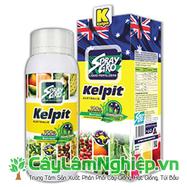 Toba Kelpit - Mát cây tốt rễ - Nhập khẩu từ Úc